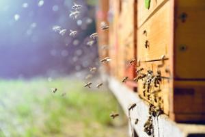 Bijenbescherming: David Clarinval verdedigt op Europees niveau een ambitieus gezamenlijk standpunt van de gewesten en de federale overheid
